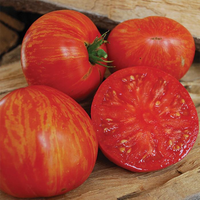 Wild Boar Solar Flare Tomato