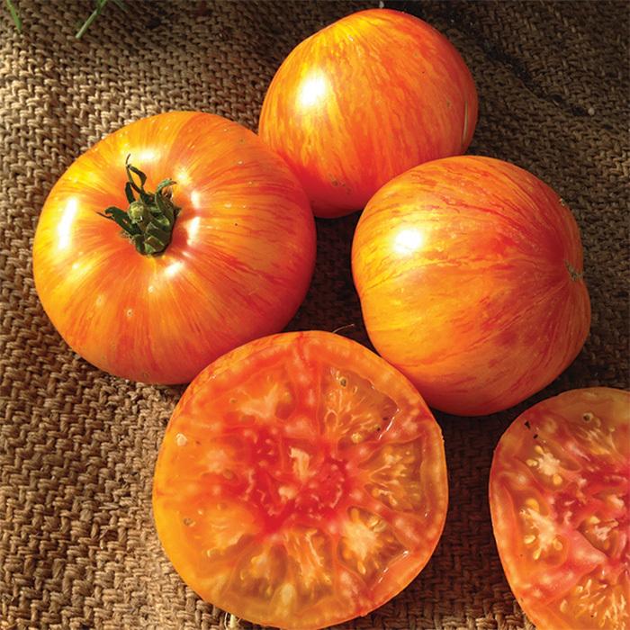 Wild Boar Beauty King Tomato