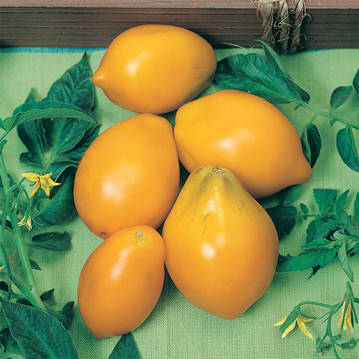 Yellow Plum Tomato