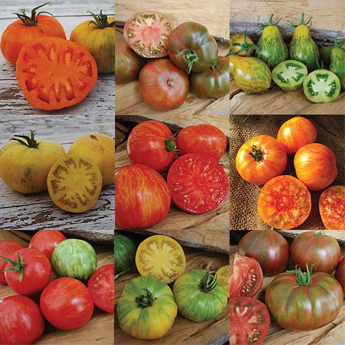 Wild Boar Tomato Collection