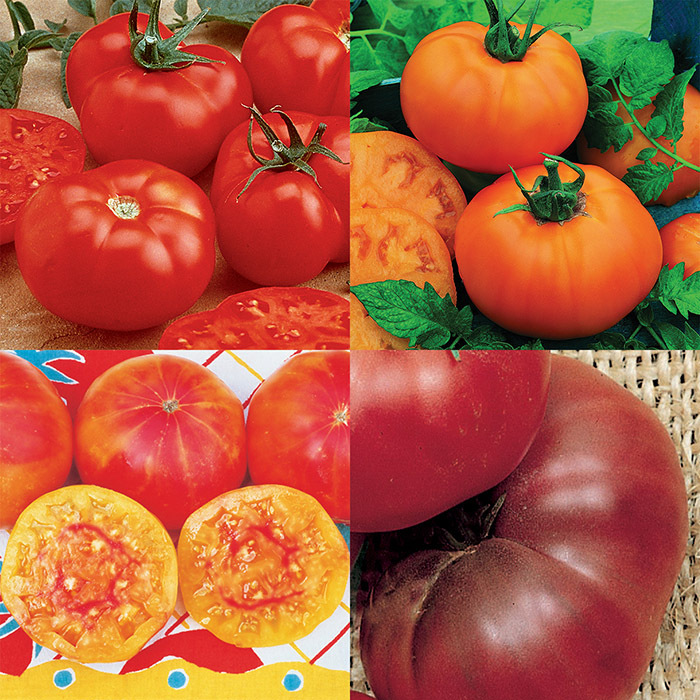 Bold And Beautiful Tomato Collection