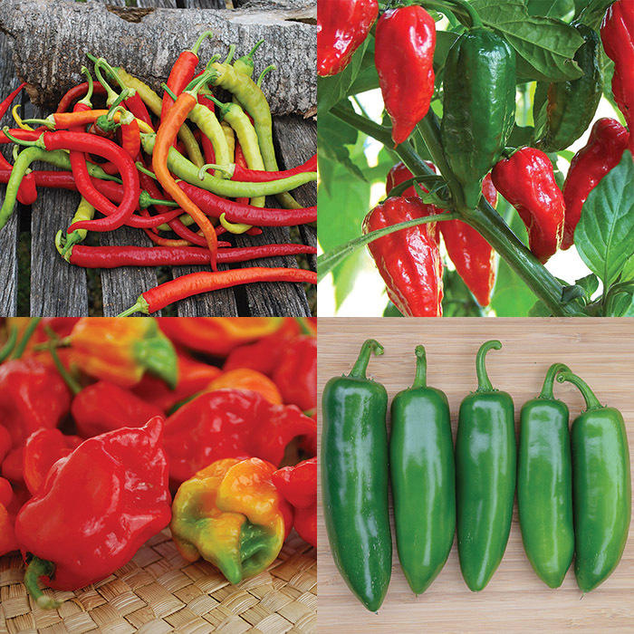 """Hot To Not"" Pepper Collection"