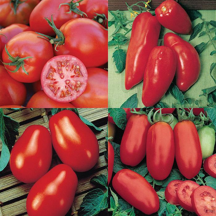 Tomato Paste Collection