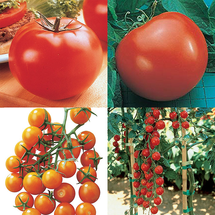 Big And Little Tomato Collection