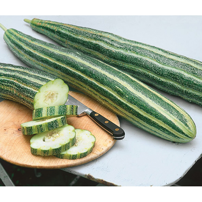 Painted Serpent Cucumber