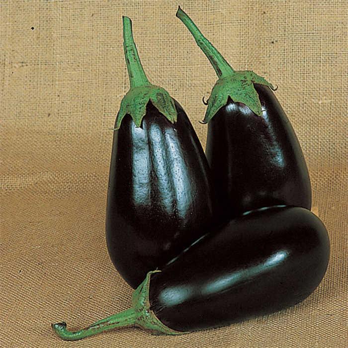 Grafted Epic Hybrid Eggplant