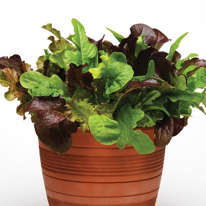 Simply Salad Global Gourmet Mesclun Mix