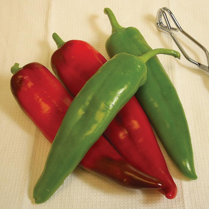 Biggie Chile Hybrid Anaheim Pepper