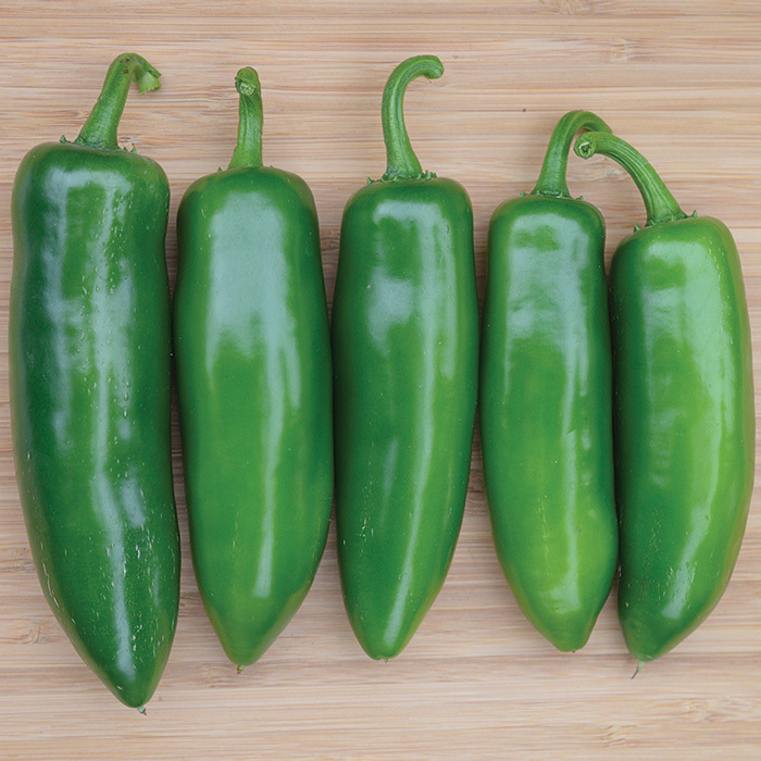 Tricked You Hybrid Jalapeno Pepper