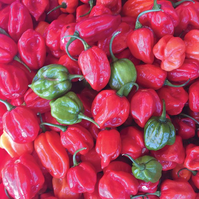 Aji Dulce #2 Pepper