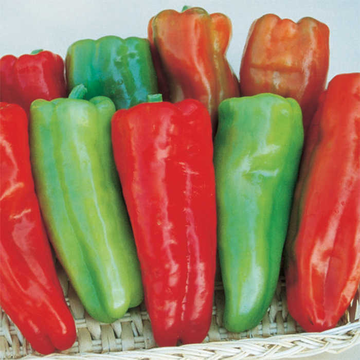 Aruba Hybrid Pepper
