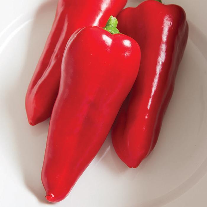 Cornito Rosso Hybrid Pepper