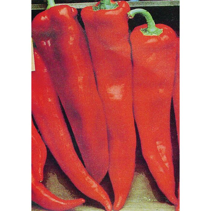 Corno Di Toro Red Pepper