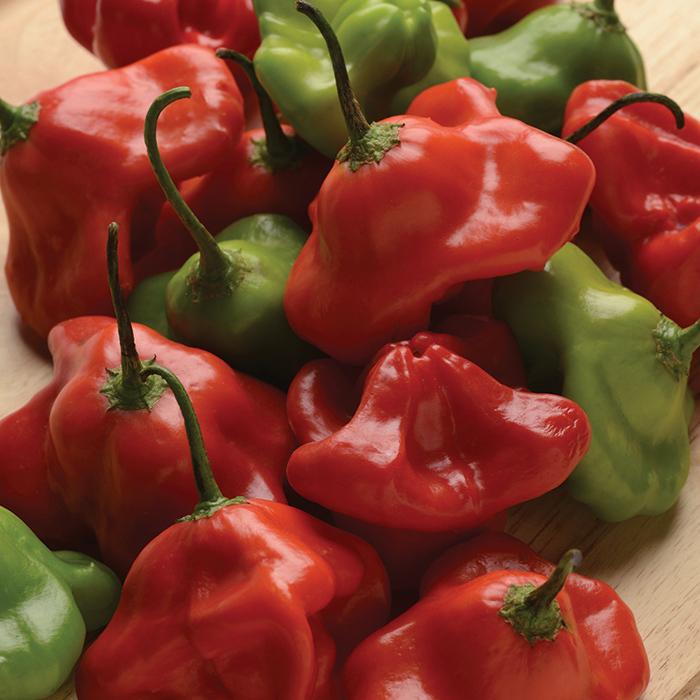 Mad Hatter Hybrid Pepper