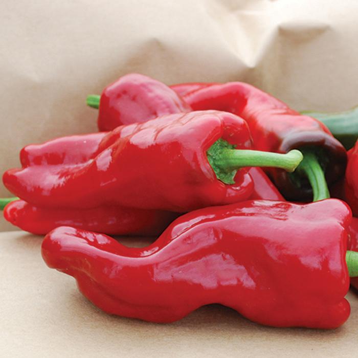Melrose Pepper