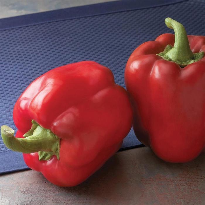Red Bull Hybrid Pepper