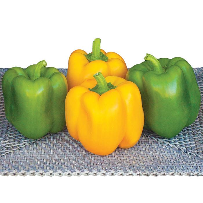 Summer Sweet #8610 Hybrid Pepper