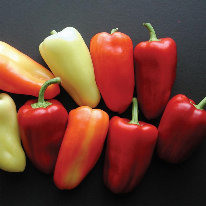 Whitney Hybrid Pepper