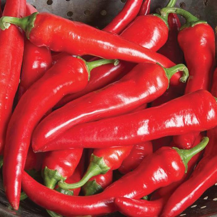 Red Ember Hybrid Pepper