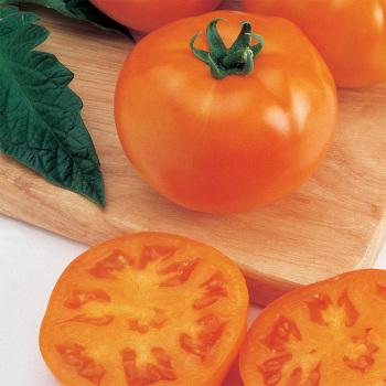 Goliath Sunny Hybrid Tomato