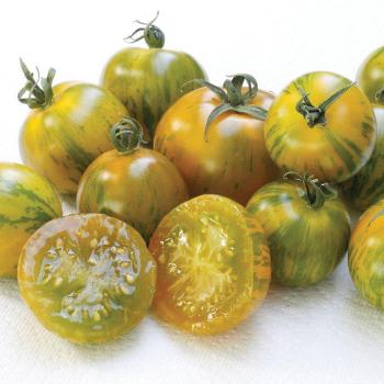 Abracazebra Tomato