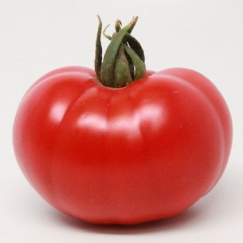American Original Red Beefsteak Hybrid Tomato