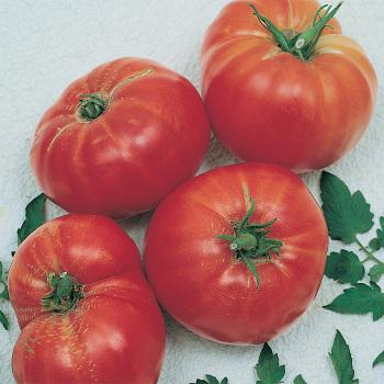 Andrew Raharts Jumbo Red Tomato