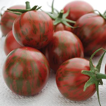 Artisan Bumble Bee Purple Tomato