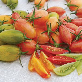 Artisian Tiger Mix Tomato
