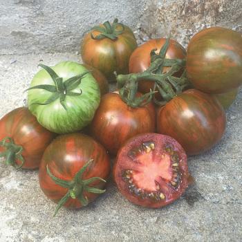 Artisan Spike Tomato