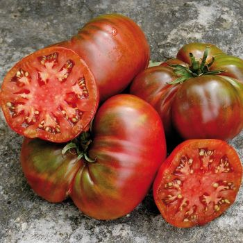 Black Sea Man Tomato