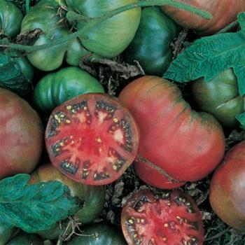 Black Krim Tomato