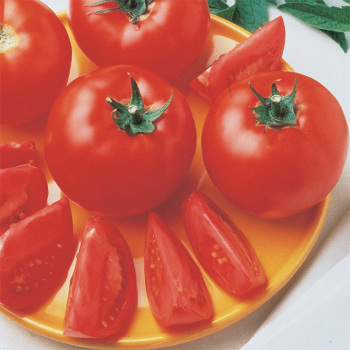 Bush Early Girl Hybrid Tomato - 20 seeds