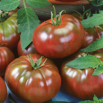 Chef's Choice Black Hybrid Tomato