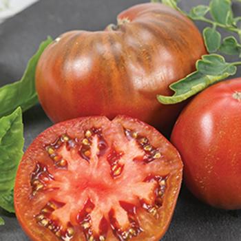 Chef's Choice Purple Hybrid Tomato