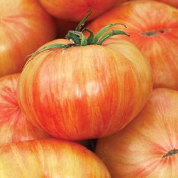 Chef's Choice Striped Hybrid Tomato