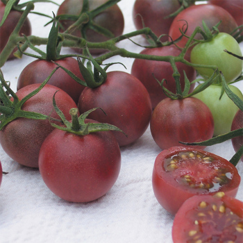 Chocolate Cherry Tomato - 30 seeds