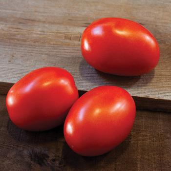 Daytona Hybrid Tomato