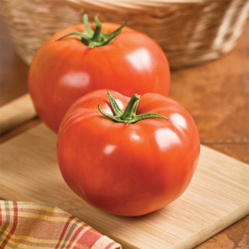 Debut Hybrid Tomato