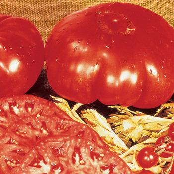 Dinner Plate Tomato