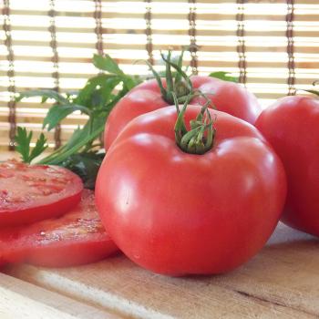 Damsel Hybrid Tomato