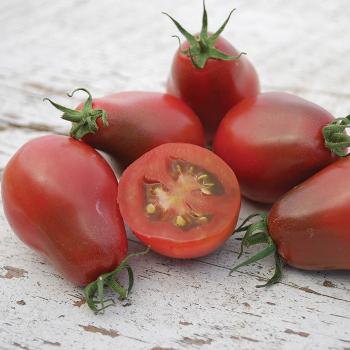 Evan's Purple Pear Tomato