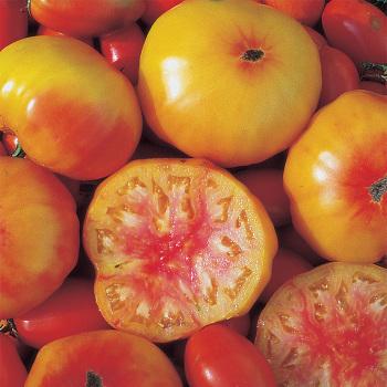 Georgia Streak Tomato