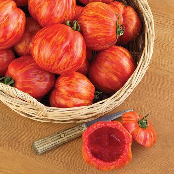 Get Stuffed! Tomato