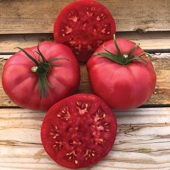 Henderson's Pink Ponderosa Tomato
