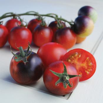 Indigo Cherry Drop Tomato