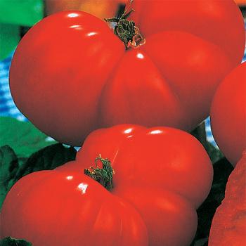 Italian Giant Beefsteak Tomato