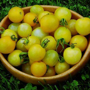 Lemon Drop Tomato