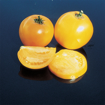Lillians Yellow Heirloom Tomato