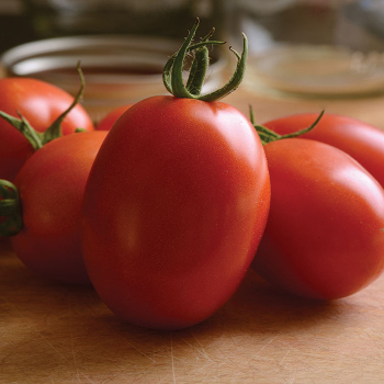 Little Napoli Hybrid Tomato - 15 seeds